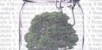 Immagine di un albero dentro un contenitore