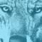 Immagine di un lupo