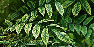 Immagine di foglie verdi