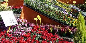Vetrine per la Festa dei fiori