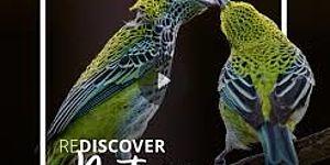 logo con due uccelli verdi su sfondo nero
