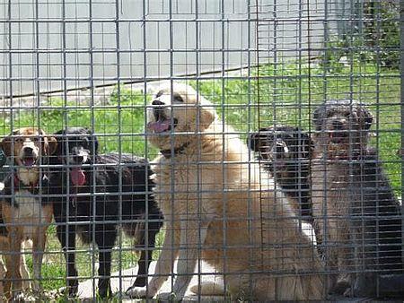 Foto di cani al canile