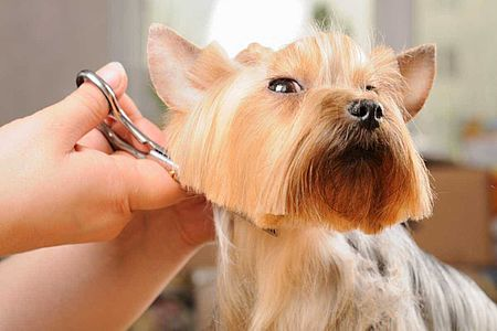 cane durante la tolettatura