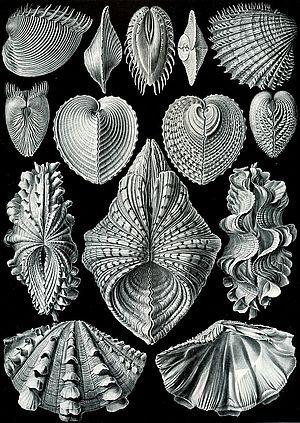 molluschi immagine