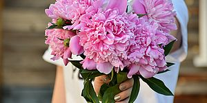 Immagine di fiori rosa