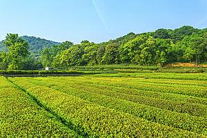 Foto di terreno agricolo