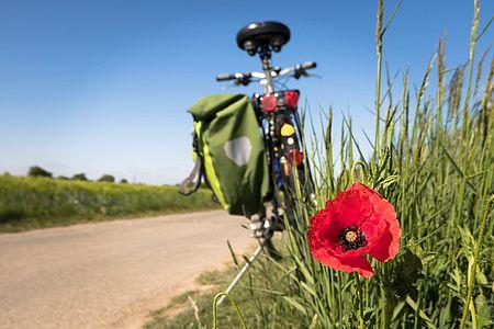 bicicletta con papavero