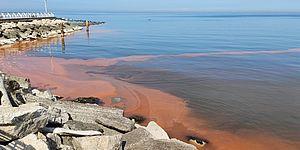 Torna la Noctiluca Scintillans e il mare si colora di rosso