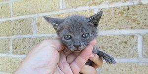 Immagine di un gattino