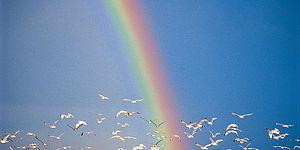 Arcobaleno al mare con gabbiani