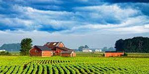 terreno coltivato con casa di campagna