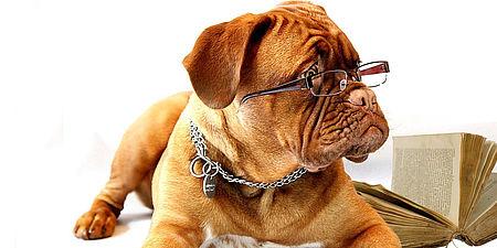 Fotografia di un cane e di un libro