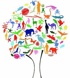 rappresentazione biodiversità