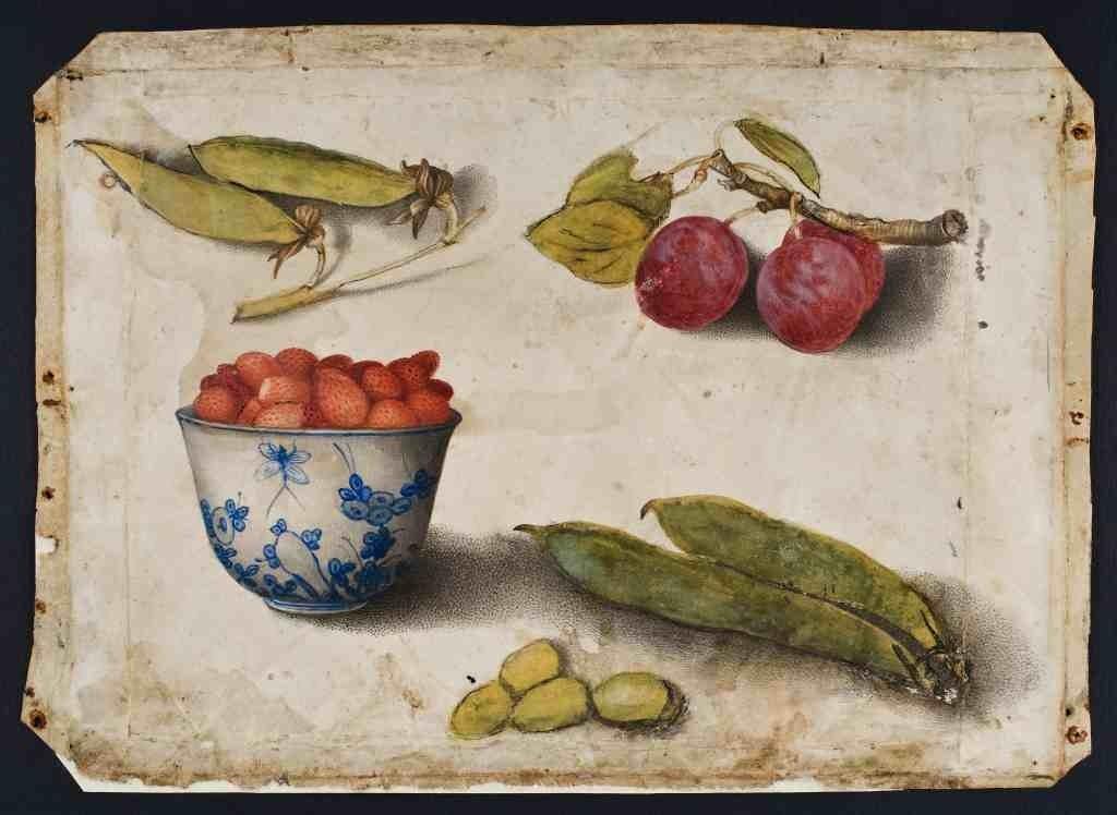 Giovanna Garzoni, disegno su pergamena, 1650 circa. Pesaro, Musei Civici
