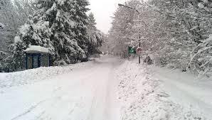 alberi strada con neve