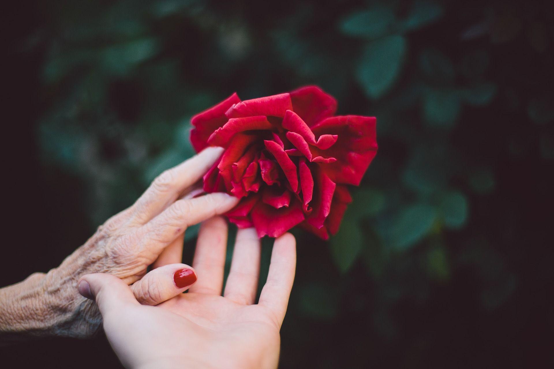 mani con rosa